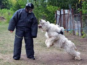 Занятия по защите (КС, собака - защитник дома и семьи, собака-телохранитель и т.д.)