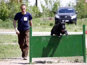 Соревнования и испытания по дрессировке собак (ОКД, ЗКС, BH и т.д.)