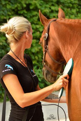 Lasertherapie Pferd