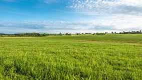 Grünland: Grasmähen, Schwaden, Erntewagen, Grashäckseln, Siloverdichtung
