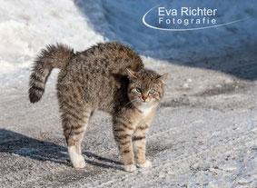 Katzen, Haustier, Foto, Eva Richter