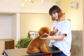 dog salon sealy stylist Kyoko Ide