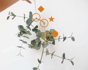 【1本目2本目】④で曲げた1本目の枝木に、20cm位の紐を2本結びつけます(◆★)。2本目の枝木を(★と●で)結びつけます。持ち上げてみて安定するところで◆と●を折曲げます。