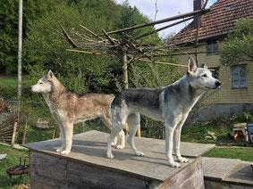Sie schauen oft nicht in dieselbe Richtung, die beiden Huskyhündinnen Ice und Rainey. Aber zum mindesten stehen sie auf demselben Dach.