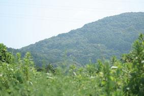 石巻山の麓です