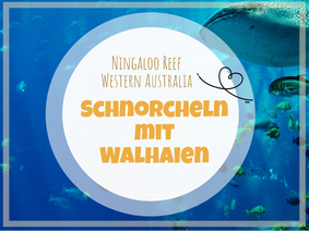 Ningaloo Reef, Snorkeling with Whalesharks, Whalesharks, Whaleshark Tour, Western Australia, Australia, Australien