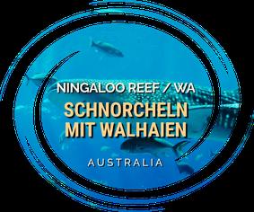 Ningaloo Reef, Snorkeling with Whalesharks, Whalesharks, Whaleshark Tour, Western Australia, Australia, Australien