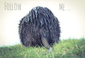 nutria follow me