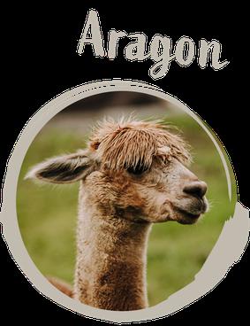 Bild von Aragon