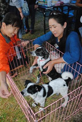 動物愛護キャンペーンでは犬・猫譲渡会も開催された=20日午後