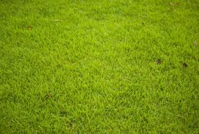 芝生 画像