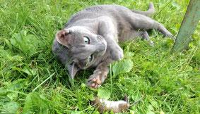 Милорад на природе в 2013 г (кастрированный котик, который сломал лапу и перенес 4 операции). Благодаря самоотверженным хозяевам сейчас лапа полностью восстановилась и Милый может охотиться!