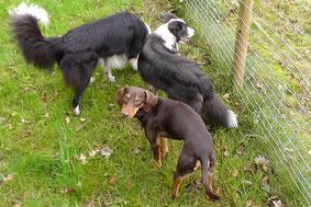 Kleine Hundegruppen - Entspanntes Miteinander