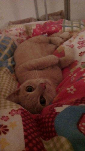 Ted durfte zu Sarah und Bene und ihren anderen beiden Katzen ziehen.