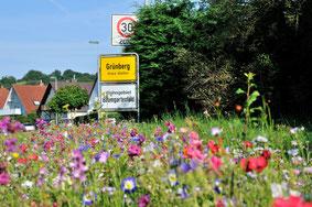 Bunter, vielfältiger, nachhaltiger - mit kleinen Vorhaben die Natur mitgestalten. Kooperationsprojekt mit dem Bienzuchtverein Grünberg, Bayer CropScience und der Stadt Grünberg  .