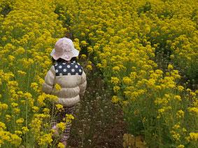 一面に黄色い菜の花畑のなかに帽子をかぶった一人の子ども