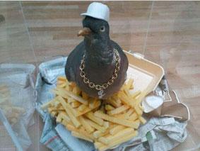 Feest duif