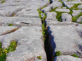 gerissen Felsboden-Struktur am Burren