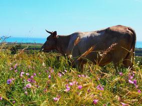 eine Kuh die sich im weiten Park verlief