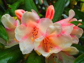 üppige Blüten-Pracht an vielen Stellen