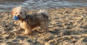 Urlaub mit eigenem Hund