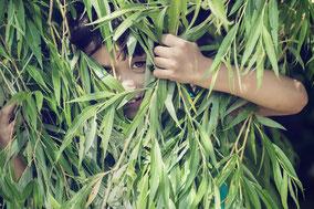 Natürliche Pflanzen und Hilfsmittel aus der Natur
