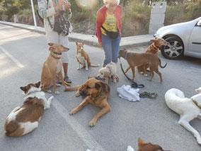 Geschafft Die Hunde meiner Freundin Christine