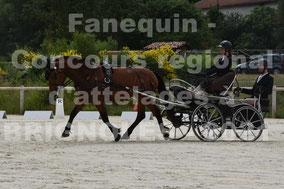 HERMITTE Virginie - solo cheval
