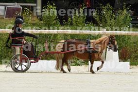 MELLA Mathide - solo poney
