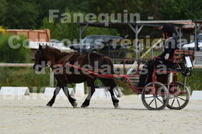 VERANI Mathis - solo poney