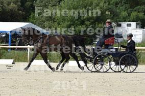ORY DEGOMME Mathieu - paire chevaux
