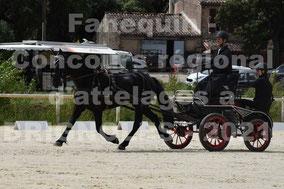CARINI Jérome - solo cheval