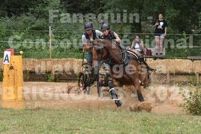 GUY HERBOMEZ Brune - solo cheval