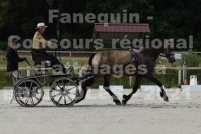 DERVIEUX Laurent - solo cheval