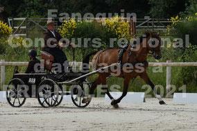 LOUIS Nicolas - solo cheval