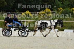 LOUIS Ambre - solo poney