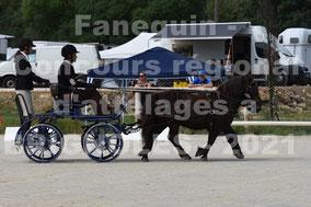 SOLBES Claude - paire poneys