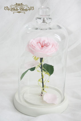 ディズニープロポーズ 一輪の薔薇 ガラスドーム 美女と野獣 ピンクローズ ツタ プリザーブドフラワー