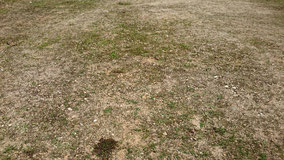 綺麗に除草された空き地