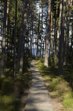 Visit Latvia, hiking along Baltic sea through forests