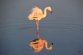 Flamingos: so weit das Auge reicht