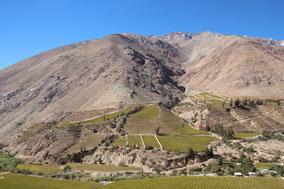 Fast wie im Südtirol: das Elqui Valley