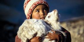 Postkarten mit den schönsten Sujets aus dem Himalaya