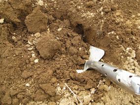 移植ゴテと土 土壌分析用の土採取写真