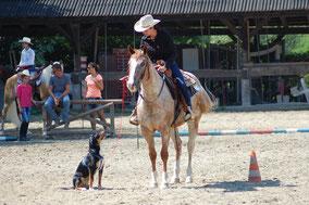 Südtirol Trail / Disziplin Horse & Dog Trail: Ein Parcours von Pferd, Reiter und Hund gemeinsam bewältigt. Priska Kelderer; Reiten in Kaltern am See; Reitschule; Pferde; Haflinger