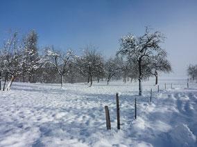 Streuobst, Schnaps, Obstler, Bodensee