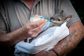 Rubyvale,Saphire,Sapphire,Emerald,Fossicking,Queensland,Australia,Australien,Outback