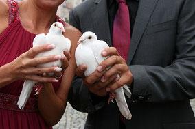 Hochzeitstauben,  Dorfmetzg Buchs, Catering, Partyservice Region Aarau und Aargau