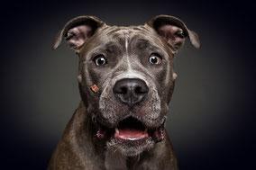 Die liebste Listenhund der Welt