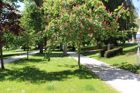 Kanstanienbaum